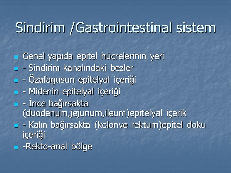 Sindirim /Gastrointestinal sistem Genel yapıda epitel hücrelerinin yeri Genel yapıda epitel hücrelerinin yeri - Sindirim kanalındaki bezler - Sindirim