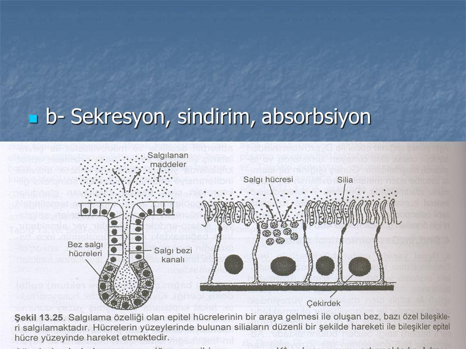 b- Sekresyon, sindirim, absorbsiyon b- Sekresyon, sindirim, absorbsiyon