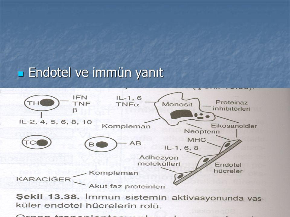 Endotel ve korunma mekanizması Endotel ve korunma mekanizması
