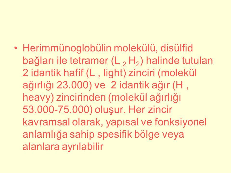 Herimmünoglobülin molekülü, disülfid bağları ile tetramer (L 2 H 2 ) halinde tutulan 2 idantik hafif (L, light) zinciri (molekül ağırlığı 23.000) ve 2 idantik ağır (H, heavy) zincirinden (molekül ağırlığı 53.000-75.000) oluşur.