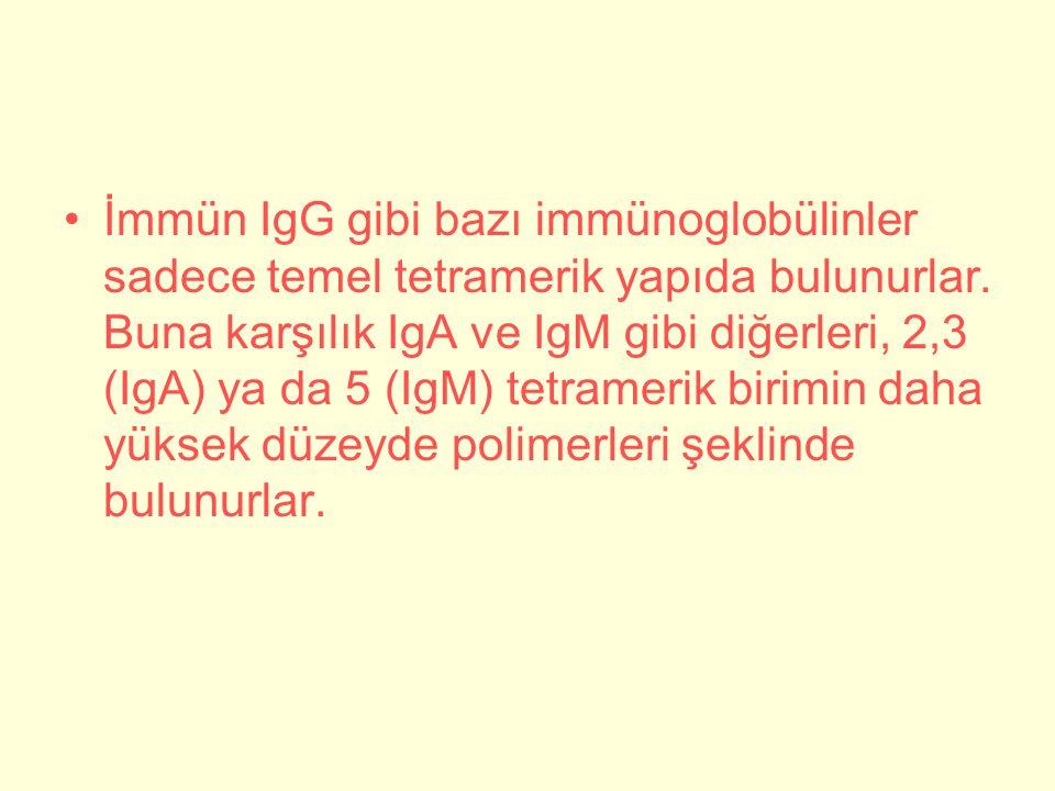 İmmün IgG gibi bazı immünoglobülinler sadece temel tetramerik yapıda bulunurlar.