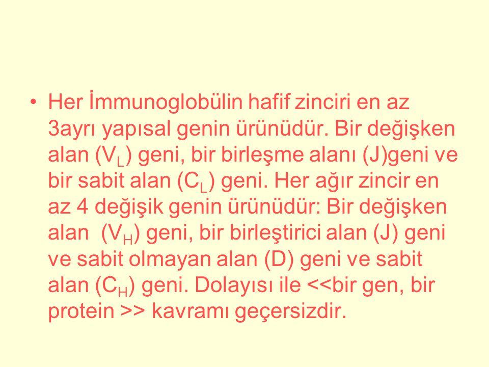 Her İmmunoglobülin hafif zinciri en az 3ayrı yapısal genin ürünüdür.
