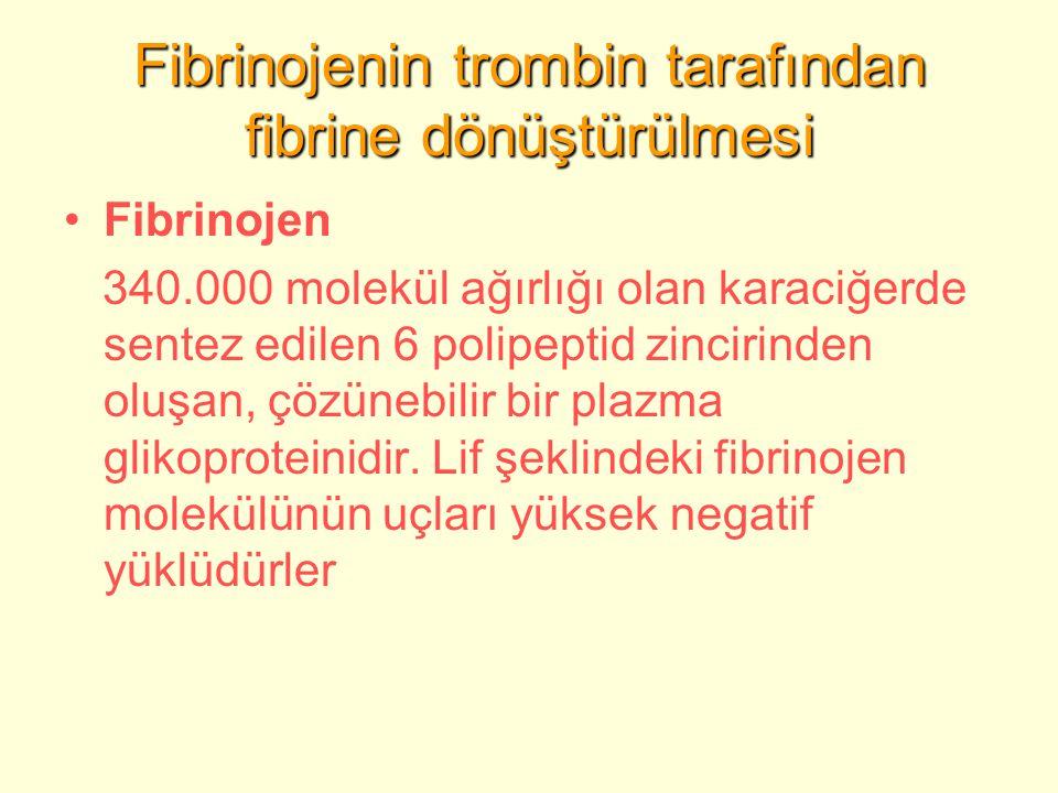 Fibrinojenin trombin tarafından fibrine dönüştürülmesi Fibrinojen 340.000 molekül ağırlığı olan karaciğerde sentez edilen 6 polipeptid zincirinden oluşan, çözünebilir bir plazma glikoproteinidir.