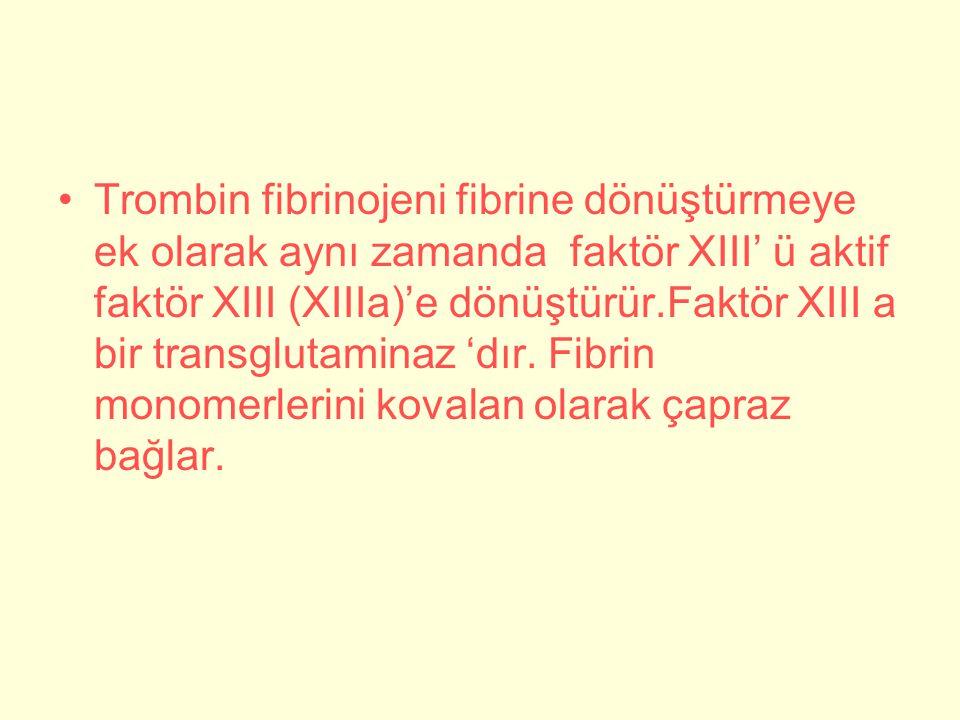 Trombin fibrinojeni fibrine dönüştürmeye ek olarak aynı zamanda faktör XIII' ü aktif faktör XIII (XIIIa)'e dönüştürür.Faktör XIII a bir transglutaminaz 'dır.