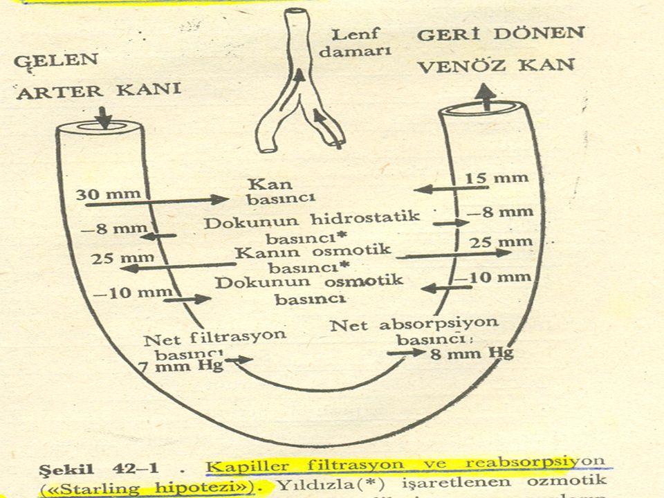 İkinci faz, Yaralanma yerinde gevşek bir trombosit tıkacı'nın veya beyaz trombus'un meydana gelmesinden ibarettir.