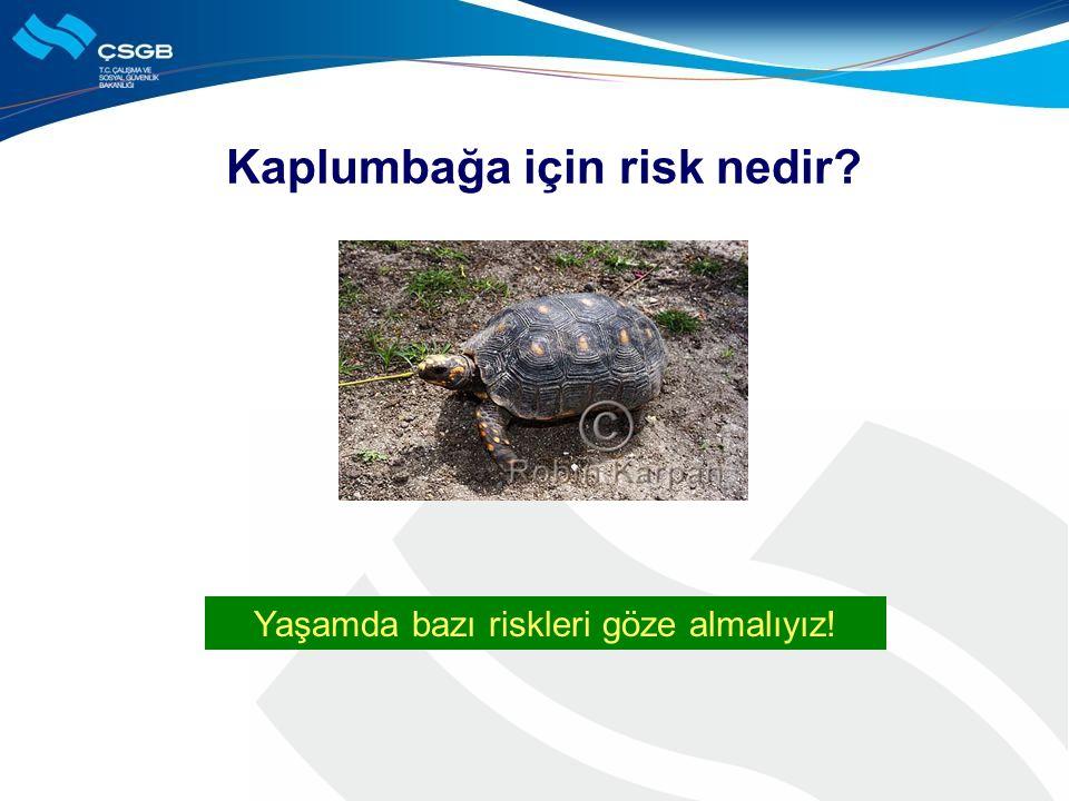 Kaplumbağa için risk nedir? Yaşamda bazı riskleri göze almalıyız!