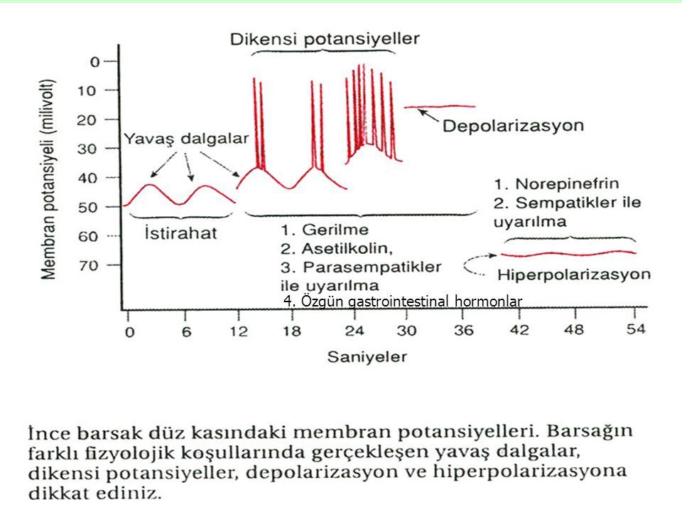 4. Özgün gastrointestinal hormonlar