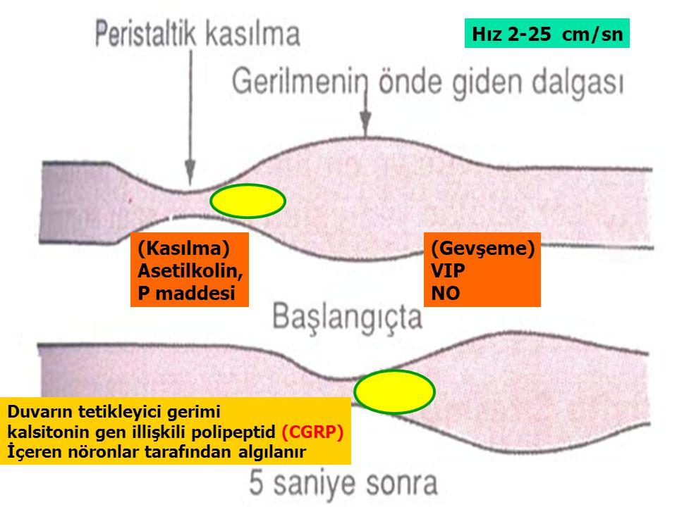 (Kasılma) Asetilkolin, P maddesi (Gevşeme) VIP NO Hız 2-25 cm/sn Duvarın tetikleyici gerimi kalsitonin gen illişkili polipeptid (CGRP) İçeren nöronlar tarafından algılanır