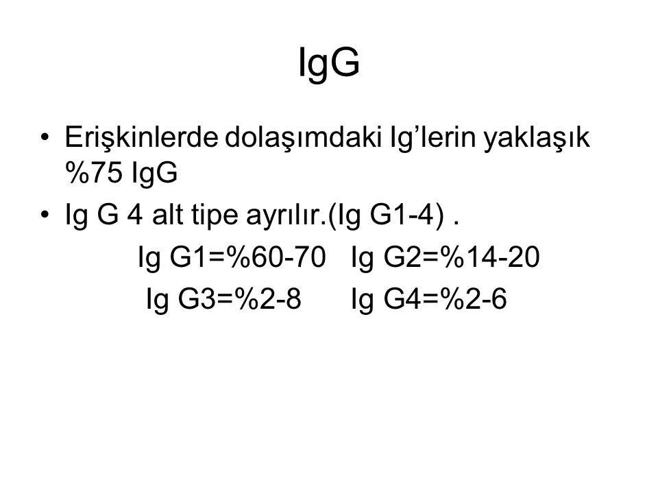 IgG Erişkinlerde dolaşımdaki Ig'lerin yaklaşık %75 IgG Ig G 4 alt tipe ayrılır.(Ig G1-4). Ig G1=%60-70 Ig G2=%14-20 Ig G3=%2-8 Ig G4=%2-6