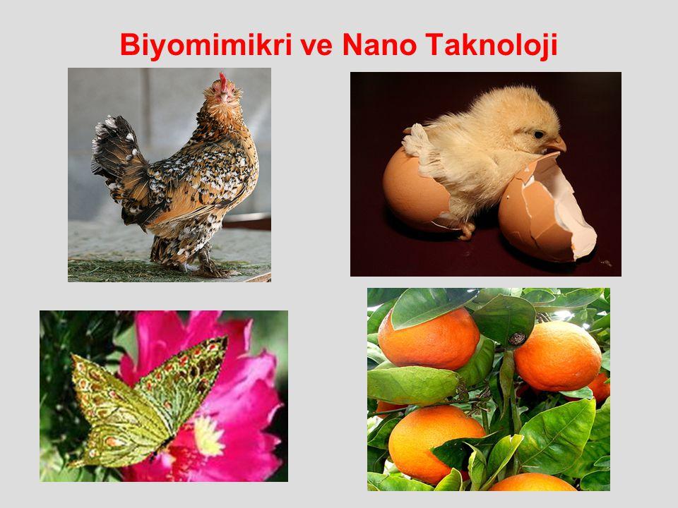 Biyomimikri ve Nano Taknoloji