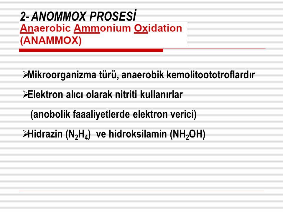 2- ANOMMOX PROSESİ  Mikroorganizma türü, anaerobik kemolitoototroflardır  Elektron alıcı olarak nitriti kullanırlar (anobolik faaaliyetlerde elektro