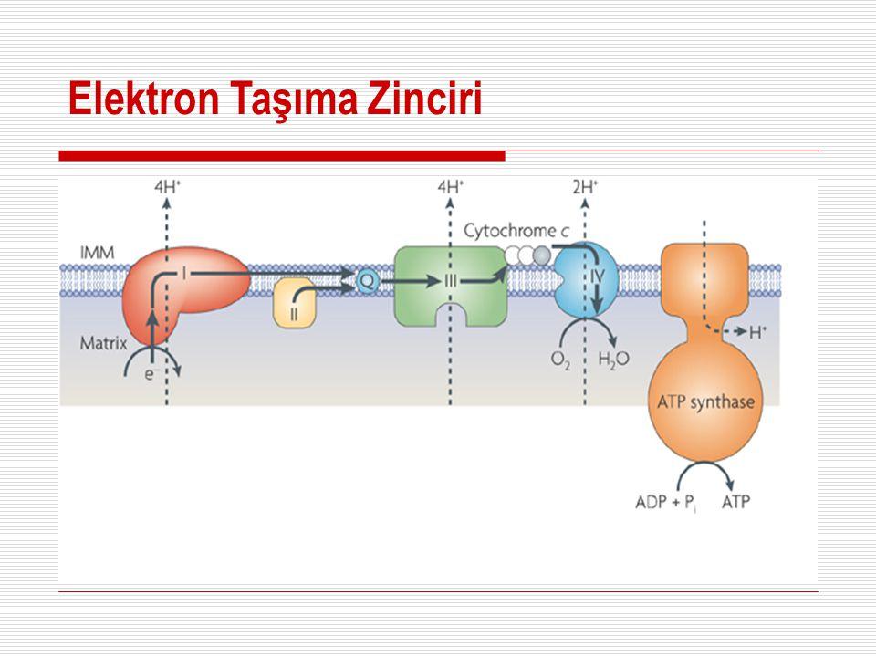 Denitrifikasyon  Elektron alıcı : nitrat (anoksik koşullar)  Elektron verici: organik bileşikler (karbon kaynağı yetersizliği)  Bakteri türü: heterotroflar