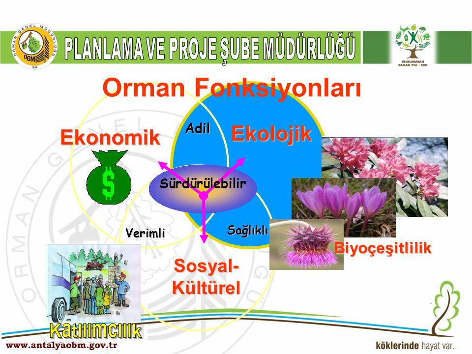 Maden, Doğal Gaz Odun Su & Toprak Rekreasyon Orman Fonksiyonları Biyolojik Çeşitlilik Yaban Hayatı Tali ürün (ODOÜ) Yaylak