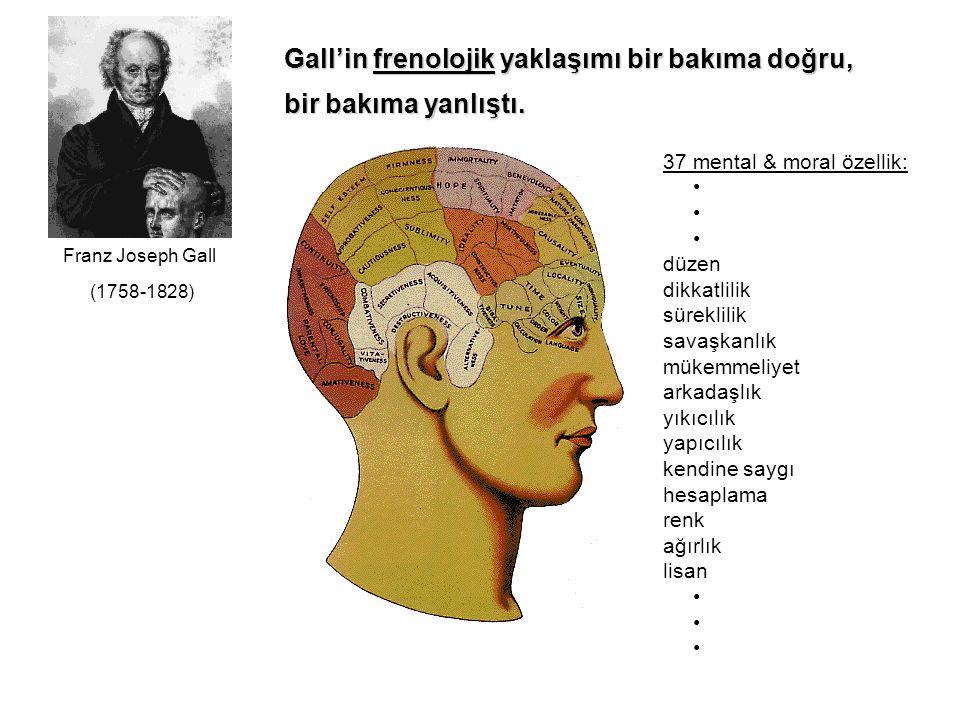 Gall'in frenolojik yaklaşımı bir bakıma doğru, bir bakıma yanlıştı. 37 mental & moral özellik: düzen dikkatlilik süreklilik savaşkanlık mükemmeliyet a