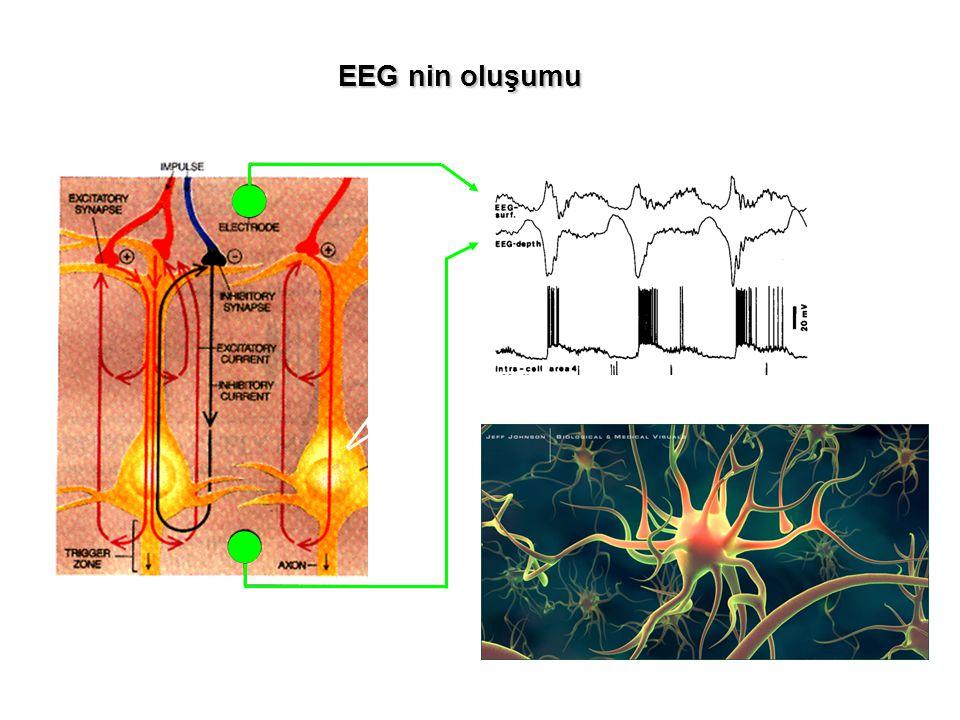 EEG nin oluşumu