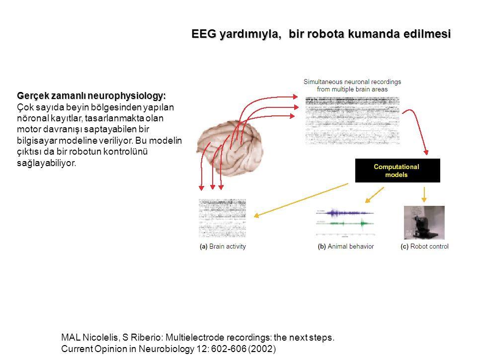 Gerçek zamanlı neurophysiology: Gerçek zamanlı neurophysiology: Çok sayıda beyin bölgesinden yapılan nöronal kayıtlar, tasarlanmakta olan motor davranışı saptayabilen bir bilgisayar modeline veriliyor.