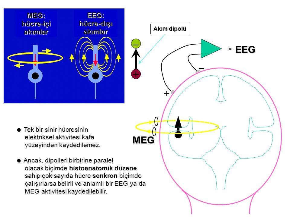 – MEG:hücre-içiakımlar EEG:hücre-dışıakımlar + _ EEG MEG + Akım dipolü  Tek bir sinir hücresinin elektriksel aktivitesi kafa elektriksel aktivitesi kafa yüzeyinden kaydedilemez.
