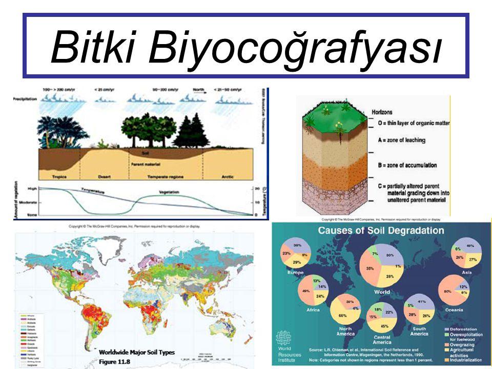 BİTKİ BİYOCOĞRAFYASI Devekuşları gibi, güney kayın ağacının (Nothofagus), yüksek oranda kopukluk ve güneyde yayılışı göreceli olarak en iyi Gondwananın yakın zamanlarda ayrılışı ile açıklanabilir.