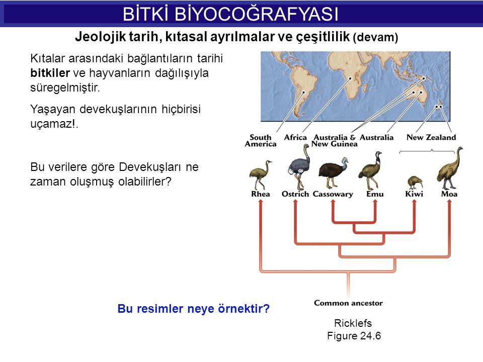 BİTKİ BİYOCOĞRAFYASI Ricklefs Figure 24.6 Kıtalar arasındaki bağlantıların tarihi bitkiler ve hayvanların dağılışıyla süregelmiştir. Yaşayan devekuşla