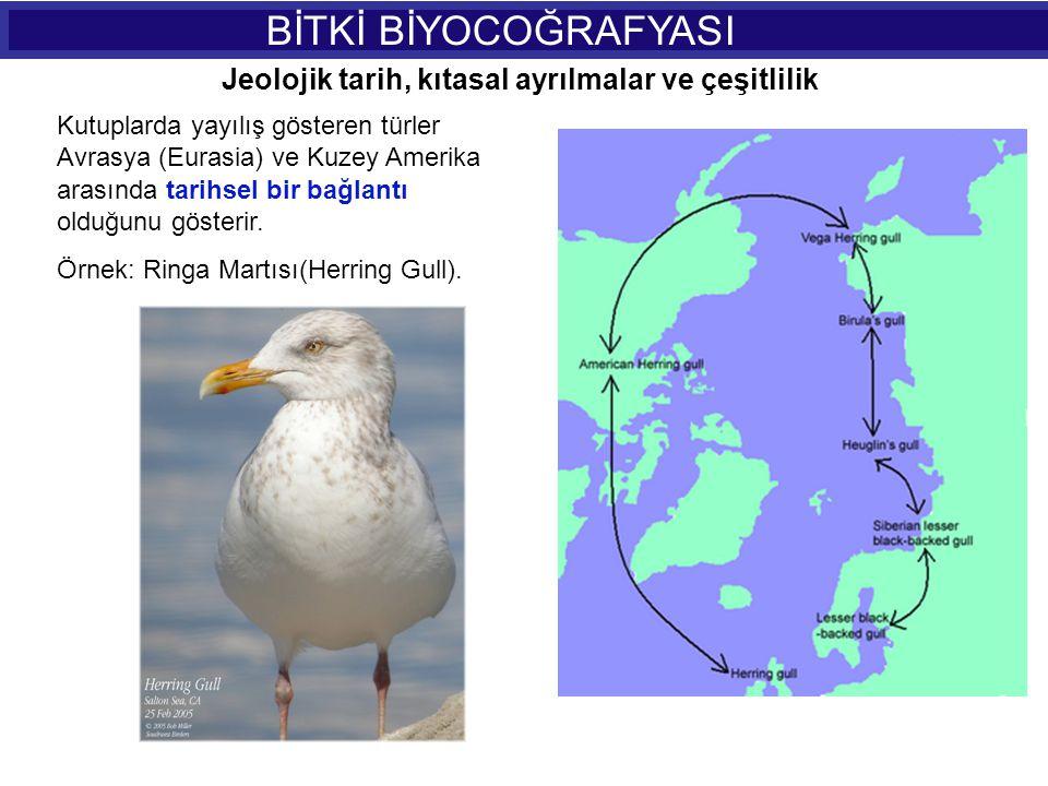 BİTKİ BİYOCOĞRAFYASI Kutuplarda yayılış gösteren türler Avrasya (Eurasia) ve Kuzey Amerika arasında tarihsel bir bağlantı olduğunu gösterir. Örnek: Ri