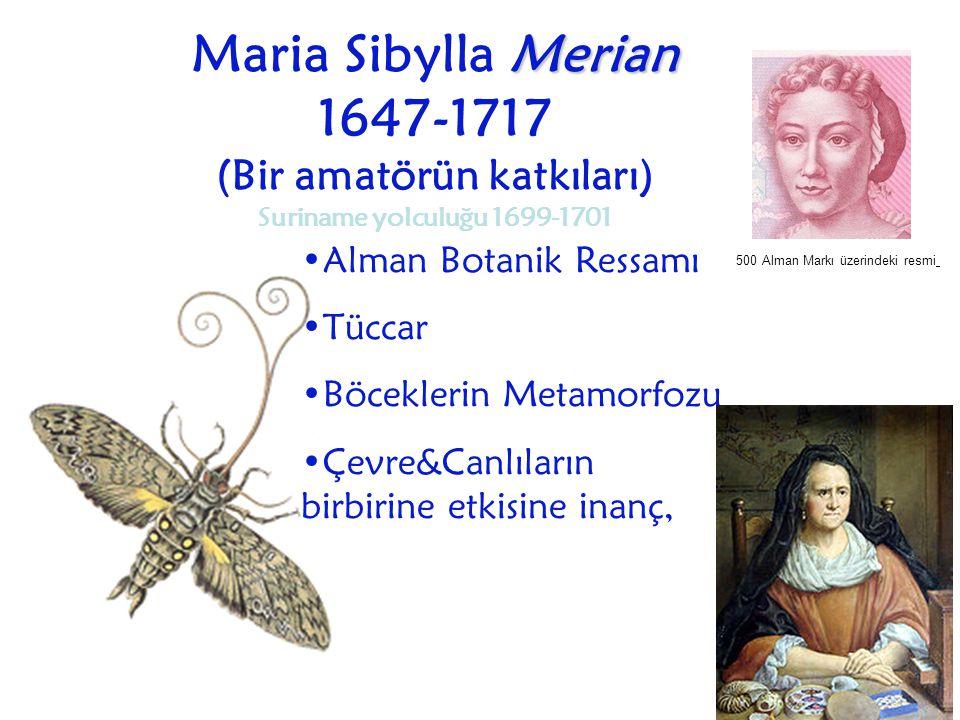 Merian Maria Sibylla Merian 1647-1717 (Bir amatörün katkıları) Suriname yolculuğu 1699-1701 Alman Botanik Ressamı Tüccar Böceklerin Metamorfozu Çevre&