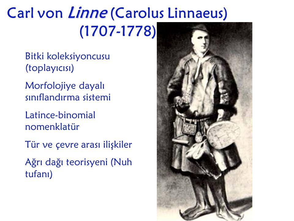 Carl von L LL Linne (Carolus Linnaeus) (1707-1778) Bitki koleksiyoncusu (toplayıcısı) Morfolojiye dayalı sınıflandırma sistemi Latince-binomial nomenk