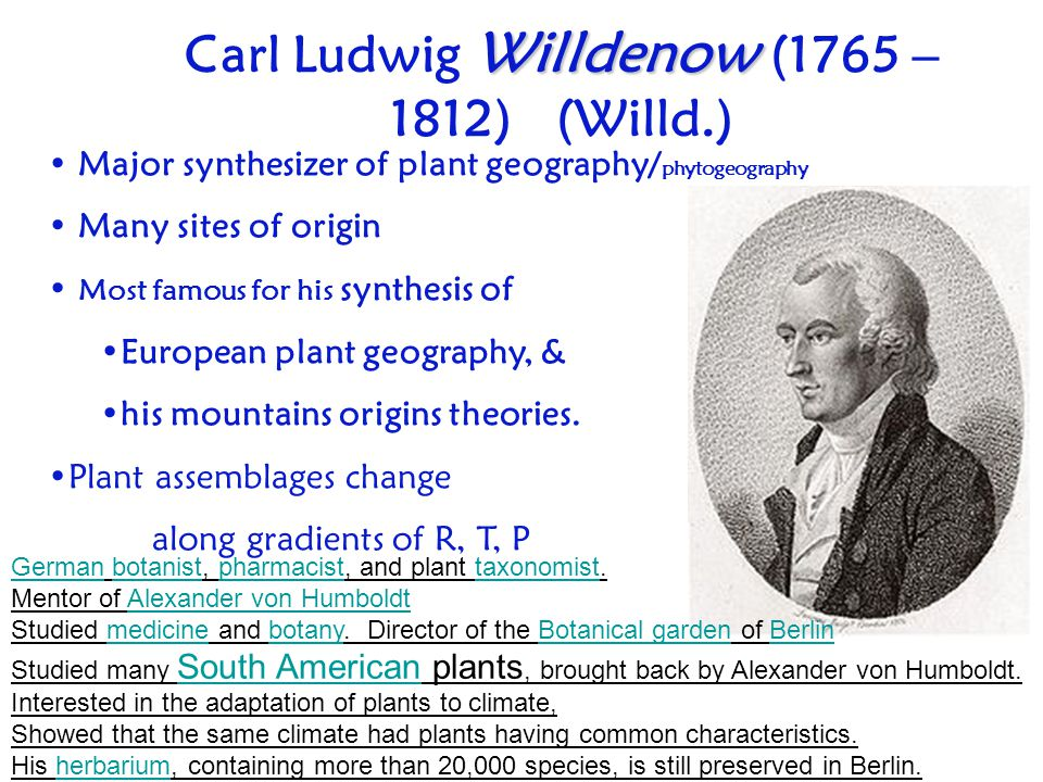 Willdenow Carl Ludwig Willdenow (1765 – 1812) (Willd.) Major synthesizer of plant geography/ phytogeography Many sites of origin Most famous for his s