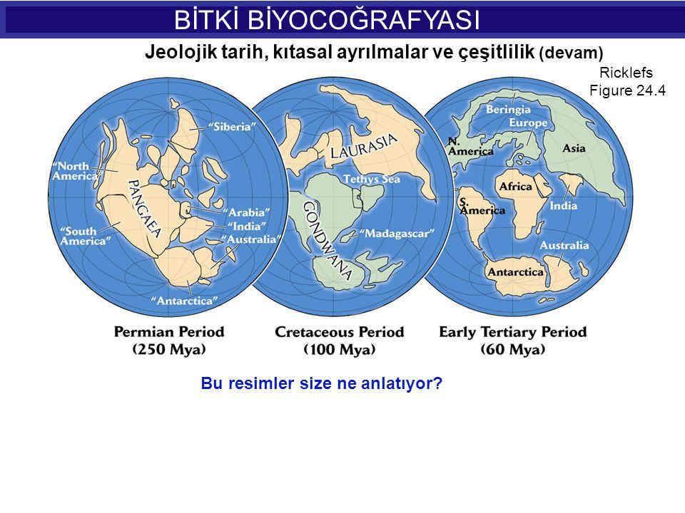 BİTKİ BİYOCOĞRAFYASI Ricklefs Figure 24.5 Jeolojik tarih, kıtasal ayrılmalar ve çeşitlilik (devam) Bu rakamlar size ne anlatıyor?