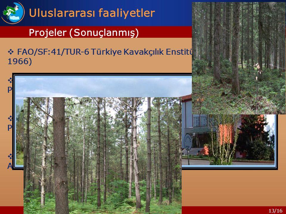 13/16  FAO/SF:41/TUR-6 Türkiye Kavakçılık Enstitüsü Projesi (1962- 1966)  FAO/TUR/71-521 Türkiye Endüstriyel Ormancılık Plantasyonları Projesi (1972-1976)  FAO/TUR/82/003 Hızlı Gelişen Yapraklı Tür Orman Plantasyonları Projesi (1982-1987)  FAO/TCP-TUR/8852 Türkiye de Yenilebilir Mantar Türleri Araştırma ve Üretim Projesi(1987-1990) Uluslararası faaliyetler Projeler (Sonuçlanmış)