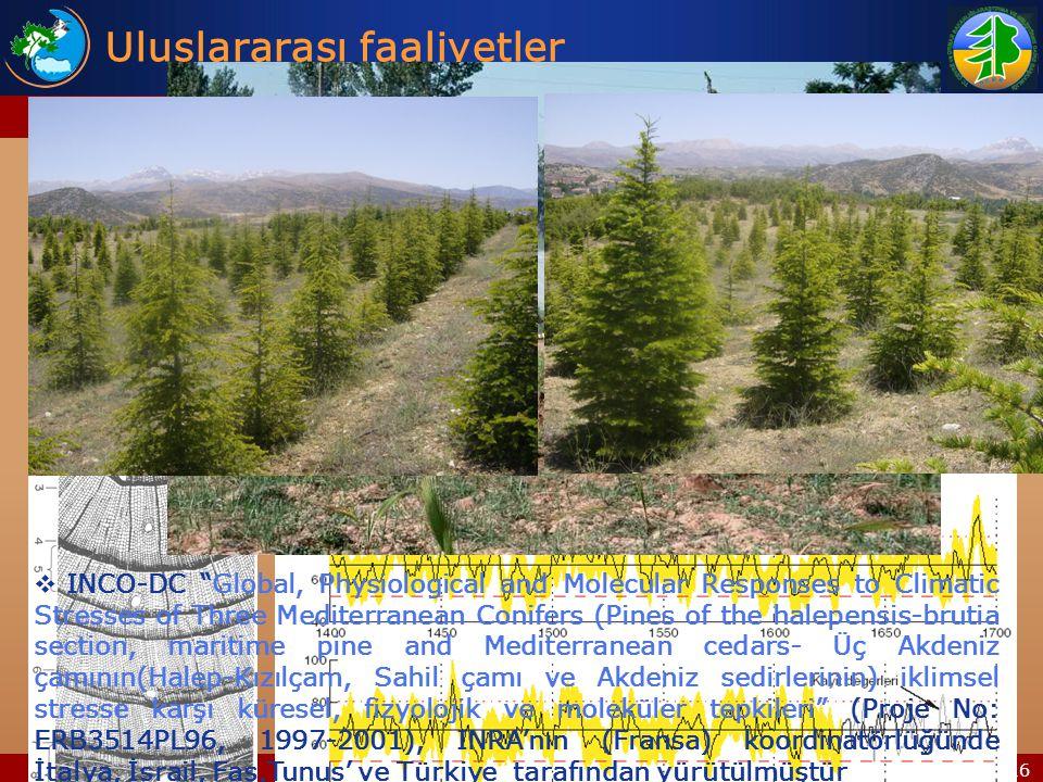 15/16  Sedir adaptasyon denemeleri, FAO Sylva Mediterranea, Batı Akdeniz Ormancılık Araştırma Müdürlüğü (1994)  Preliminary reconstructions of spring precipitation in southwestern Turkey from tree-ring width - Yıllık halka kalınlıklarından Batı Akdeniz Bölgesi'nde geçmişte yaşanmış ilkbahar yağış miktarlarının tespiti , (2000- 2003), Grant Number: 0075956, 0080834, Arizona Üniversitesi, Batı Akdeniz Ormancılık Araştırma Müdürlüğü Uluslararası faaliyetler Projeler (Devam eden)  Kızılçam ormanlarında yangın sonrasıvejetasyonun zamansal ve yapısal değişimi , (2006-2009), TOVAG-106O487(Slovenya), Slovenya Bilimler Akademisi, TUBITAK, Batı Akdeniz Ormancılık Araştırma Müdürlüğü  INCO-DC Global, Physiological and Molecular Responses to Climatic Stresses of Three Mediterranean Conifers (Pines of the halepensis-brutia section, maritime pine and Mediterranean cedars- Üç Akdeniz çamının(Halep-Kızılçam, Sahil çamı ve Akdeniz sedirlerinin) iklimsel stresse karşı küresel, fizyolojik ve moleküler tepkileri (Proje No: ERB3514PL96, 1997-2001), INRA'nın (Fransa) koordinatörlüğünde İtalya, İsrail, Fas,Tunus' ve Türkiye tarafından yürütülmüştür