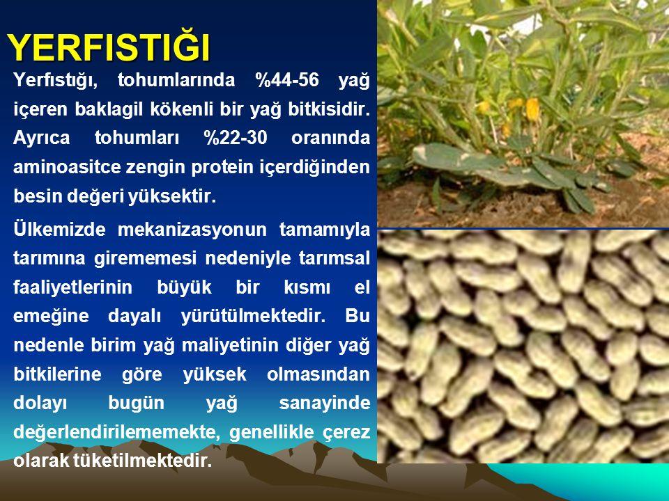 YERFISTIĞI Yerfıstığı, tohumlarında %44-56 yağ içeren baklagil kökenli bir yağ bitkisidir. Ayrıca tohumları %22-30 oranında aminoasitce zengin protein
