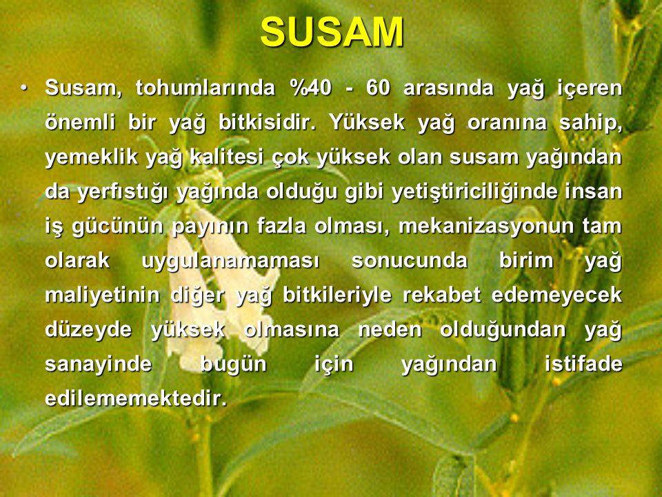 SUSAM Susam, tohumlarında %40 - 60 arasında yağ içeren önemli bir yağ bitkisidir. Yüksek yağ oranına sahip, yemeklik yağ kalitesi çok yüksek olan susa