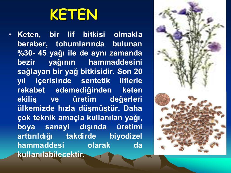 KETEN Keten, bir lif bitkisi olmakla beraber, tohumlarında bulunan %30- 45 yağı ile de aynı zamanda bezir yağının hammaddesini sağlayan bir yağ bitkis