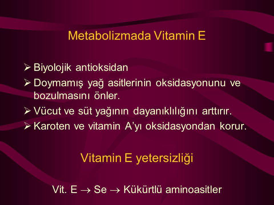 Metabolizmada Vitamin E  Biyolojik antioksidan  Doymamış yağ asitlerinin oksidasyonunu ve bozulmasını önler.  Vücut ve süt yağının dayanıklılığını