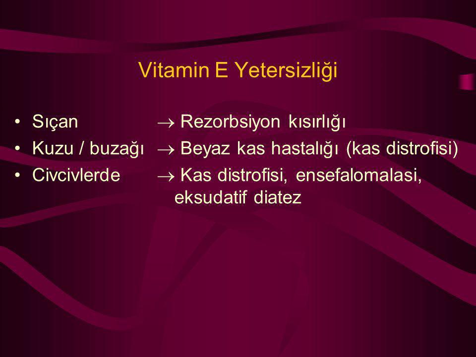 Vitamin E Yetersizliği Sıçan  Rezorbsiyon kısırlığı Kuzu / buzağı  Beyaz kas hastalığı (kas distrofisi) Civcivlerde  Kas distrofisi, ensefalomalasi