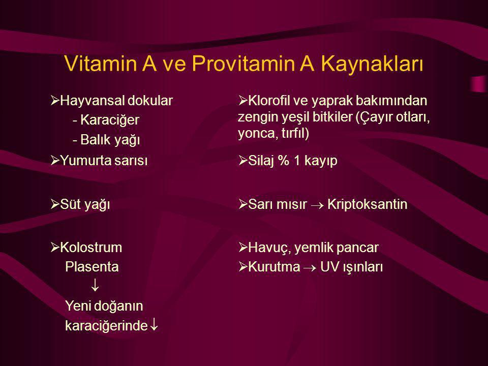 Vitamin A ve Provitamin A Kaynakları  Hayvansal dokular - Karaciğer - Balık yağı  Klorofil ve yaprak bakımından zengin yeşil bitkiler (Çayır otları,