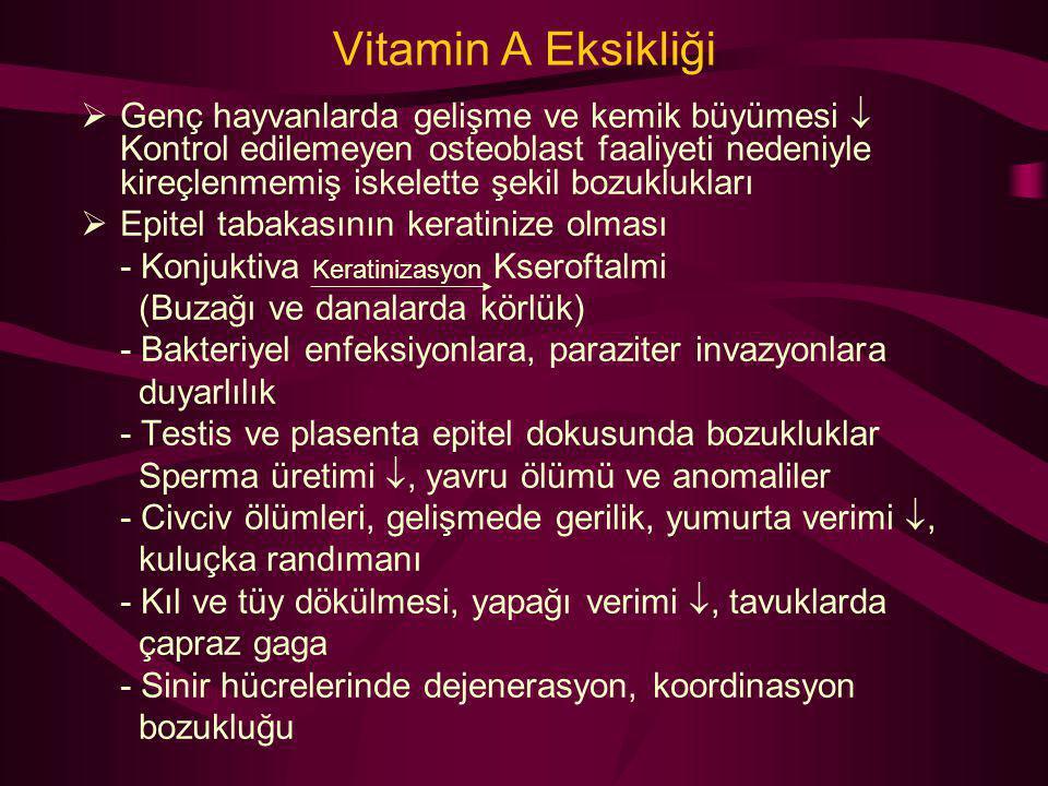 Vitamin A Eksikliği  Genç hayvanlarda gelişme ve kemik büyümesi  Kontrol edilemeyen osteoblast faaliyeti nedeniyle kireçlenmemiş iskelette şekil boz