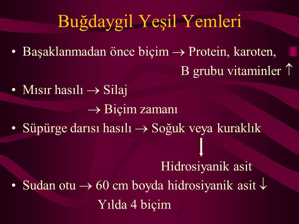 Buğdaygil Yeşil Yemleri Başaklanmadan önce biçim  Protein, karoten, B grubu vitaminler  Mısır hasılı  Silaj  Biçim zamanı Süpürge darısı hasılı 