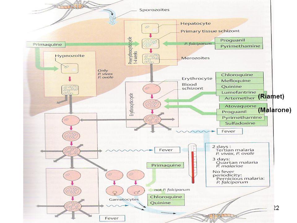 Dr. İsmail ÜN22 (Riamet) (Malarone)