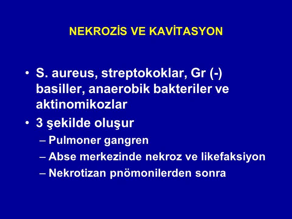 NEKROZİS VE KAVİTASYON S. aureus, streptokoklar, Gr (-) basiller, anaerobik bakteriler ve aktinomikozlar 3 şekilde oluşur –Pulmoner gangren –Abse merk
