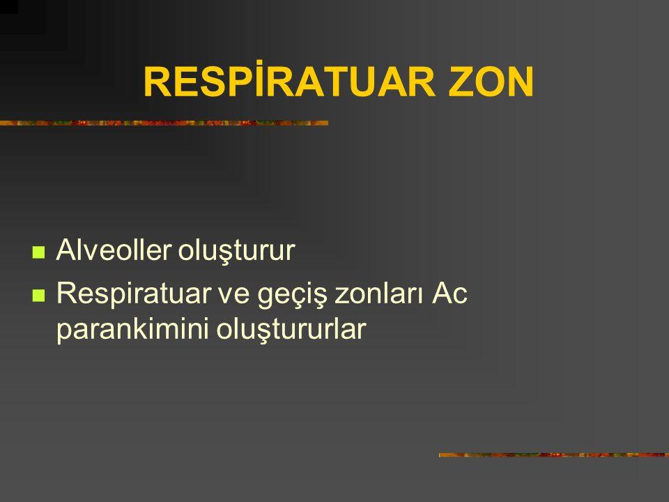 RESPİRATUAR ZON Alveoller oluşturur Respiratuar ve geçiş zonları Ac parankimini oluştururlar
