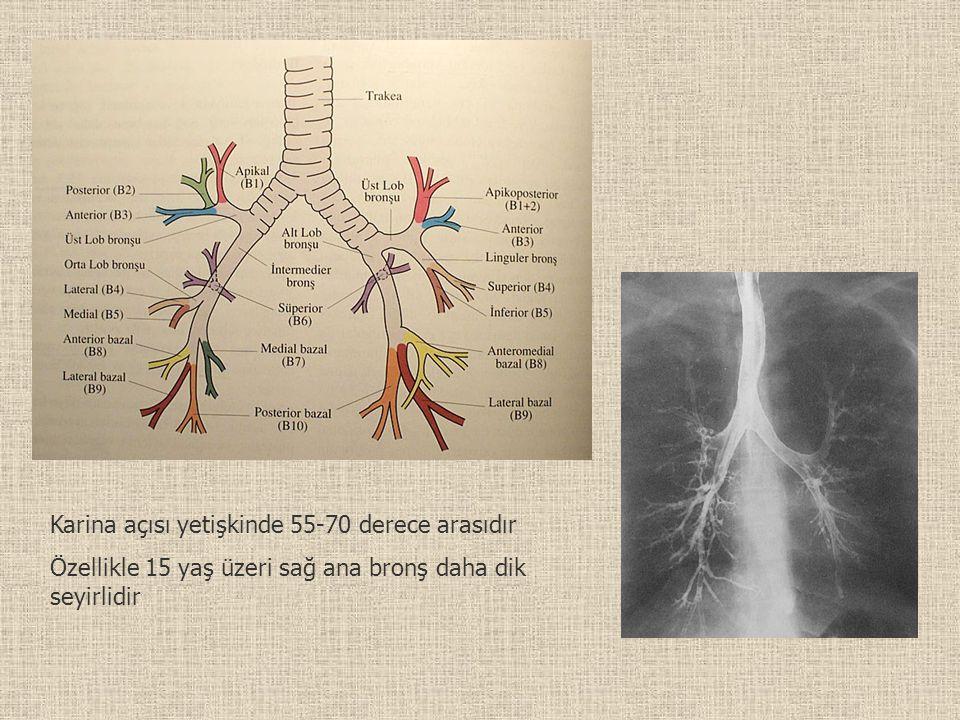 Karina açısı yetişkinde 55-70 derece arasıdır Özellikle 15 yaş üzeri sağ ana bronş daha dik seyirlidir