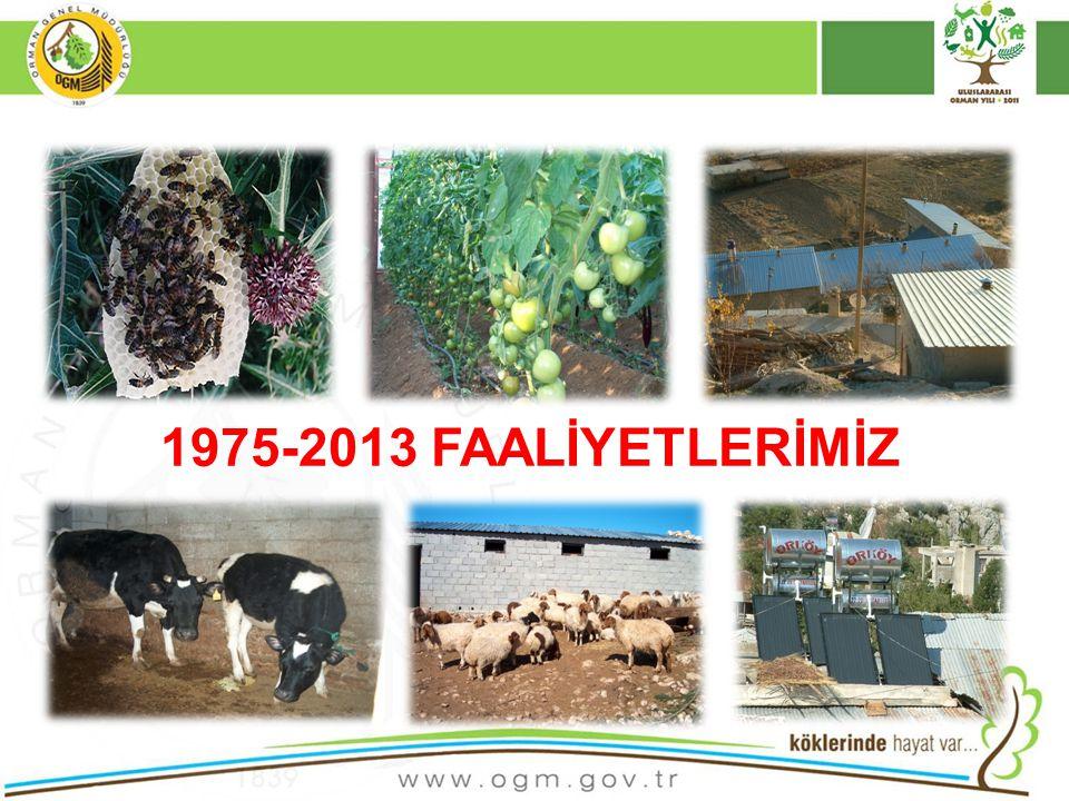 10 1975-2013 FAALİYETLERİMİZ