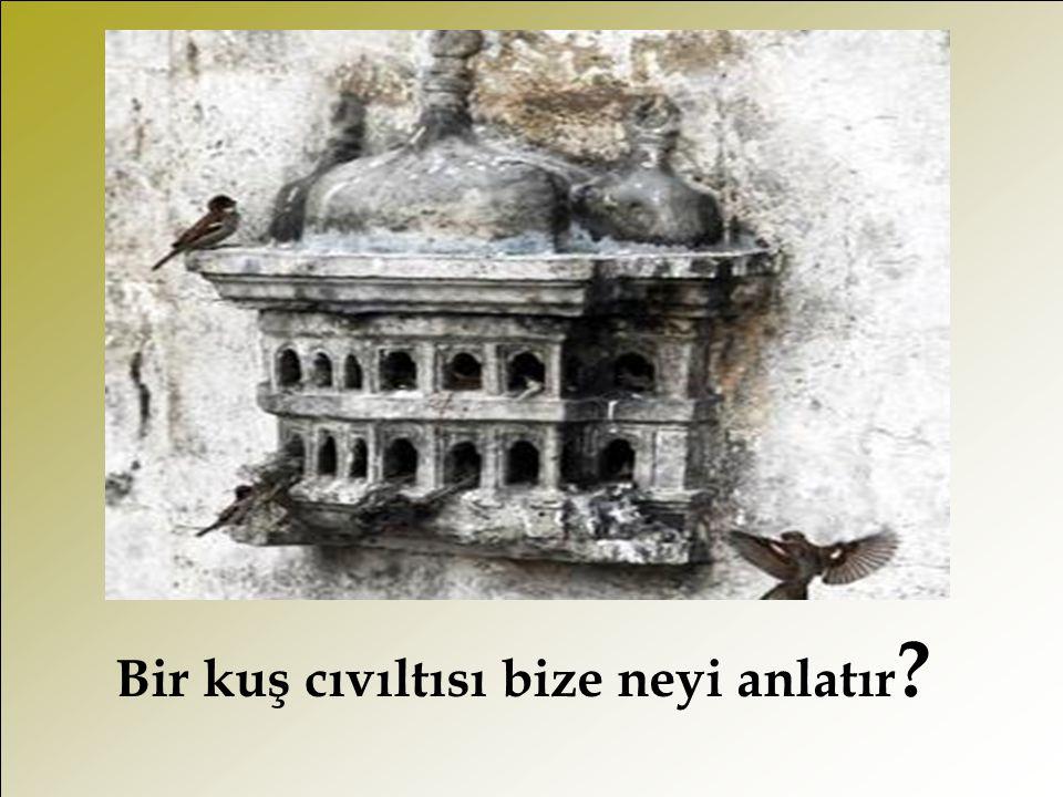 Bir kuş cıvıltısı bize neyi anlatır ?