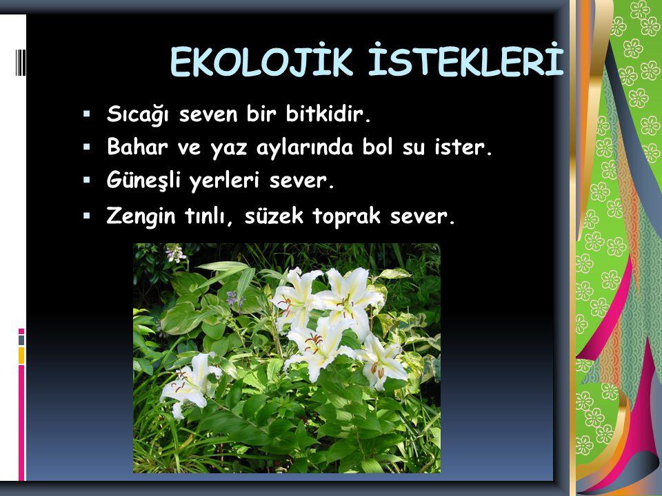 EKOLOJİK İSTEKLERİ  Sıcağı seven bir bitkidir. Bahar ve yaz aylarında bol su ister.