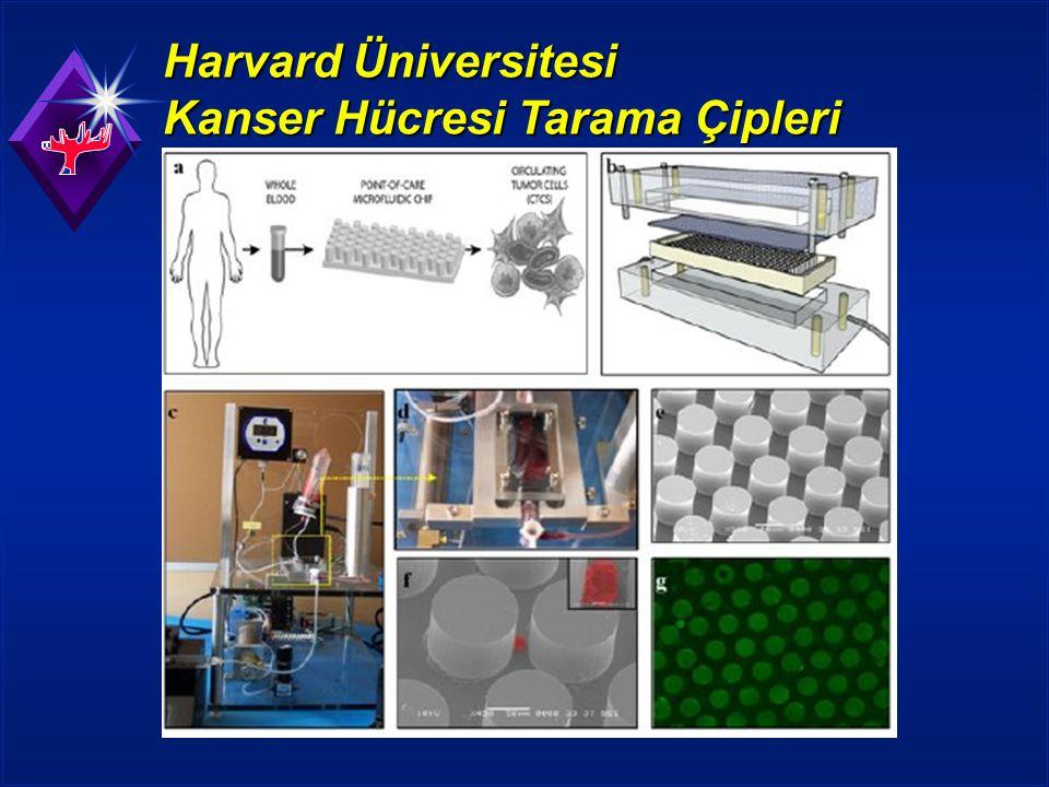 Harvard Üniversitesi Kanser Hücresi Tarama Çipleri