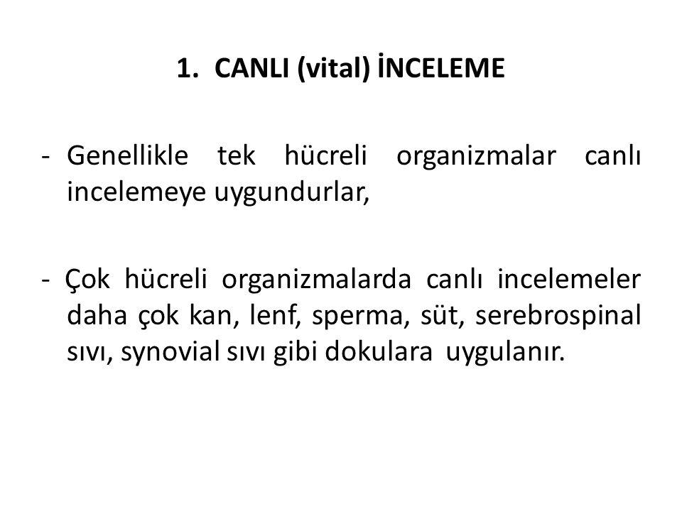 1.CANLI (vital) İNCELEME -Genellikle tek hücreli organizmalar canlı incelemeye uygundurlar, - Çok hücreli organizmalarda canlı incelemeler daha çok ka
