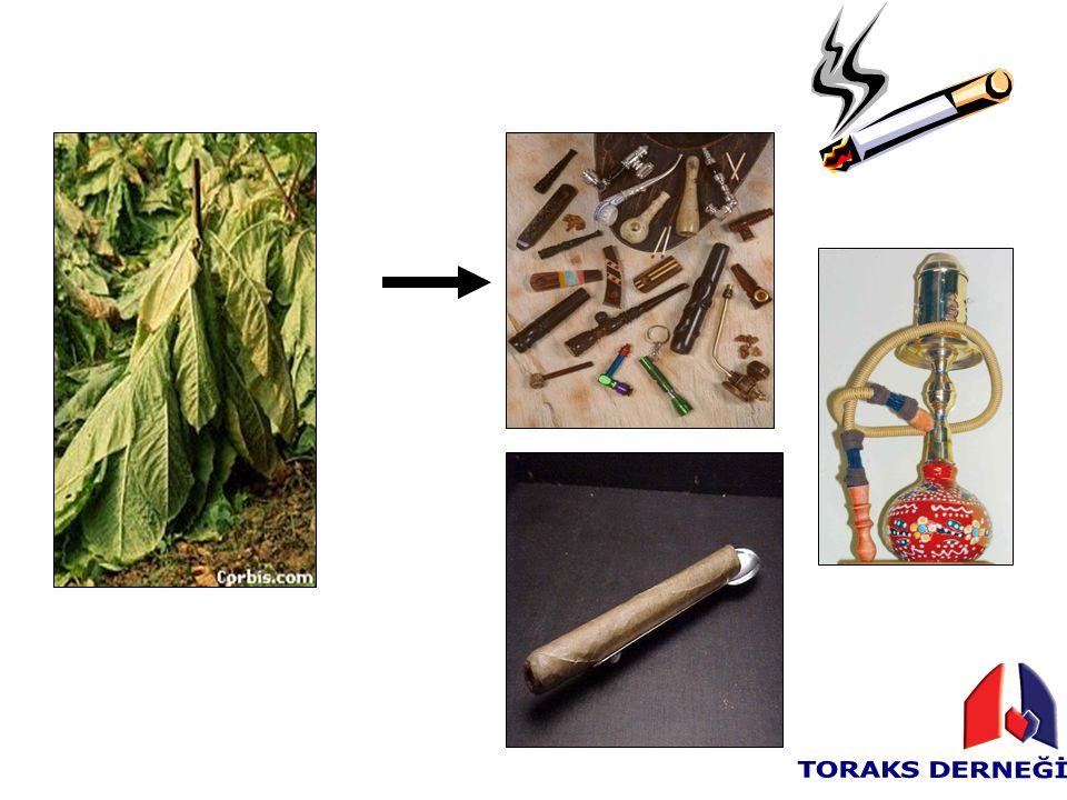 Sigara erken bunamaya yol açar Parkinson hastalığının belirtilerinin ortaya çıkmasını geciktirdiğinden geç tanıya sebep olur