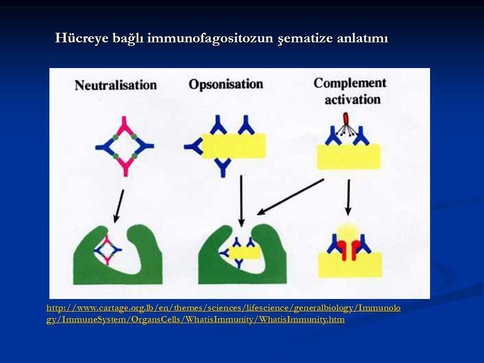 http://www.cartage.org.lb/en/themes/sciences/lifescience/generalbiology/Immunolo gy/ImmuneSystem/OrgansCells/WhatisImmunity/WhatisImmunity.htm http://