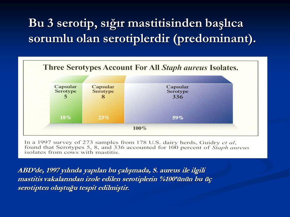 Bu 3 serotip, sığır mastitisinden başlıca sorumlu olan serotiplerdir (predominant). ABD'de, 1997 yılında yapılan bu çalışmada, S. aureus ile ilgili ma